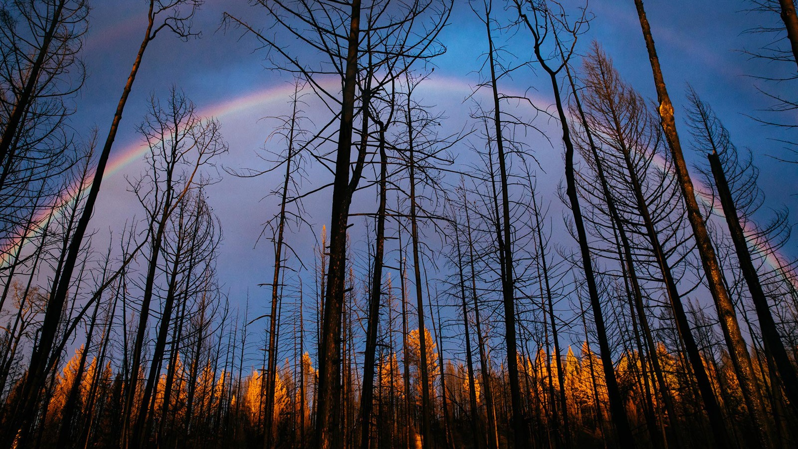 Black Snag forest lit by rainbow at Siwash Lake Wilderness Resort