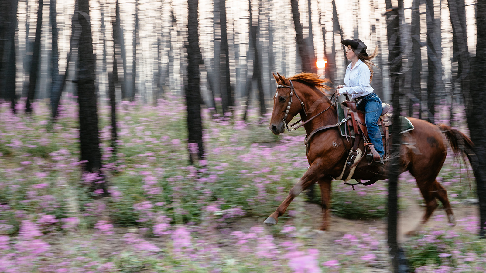 Riding in the Enchanted Forest at Siwash Lake Luxury Ranch